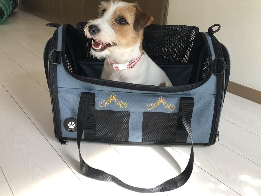 このバッグならおりこうさんにしてるからさー、お外行こうよー