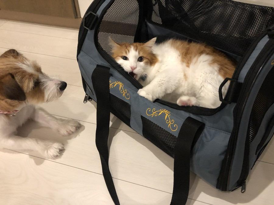 時には喧嘩もよい思い出に。取り合いになる最高のペットキャリーバッグ。