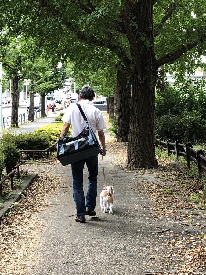ついつい、はしゃぎすぎて帰りはグッタリも。そんな時頼れる最高のペットキャリーバッグ